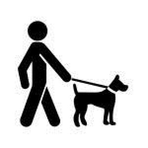 leashed-dog